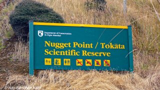 Nugget Point - Tokata014.jpg