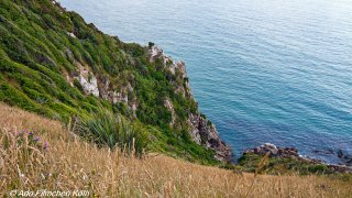 Nugget Point - Tokata019.jpg