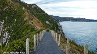 Nugget Point - Tokata026.jpg